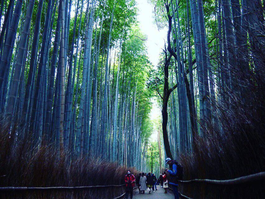 kyoto bamboo groves arashiyama